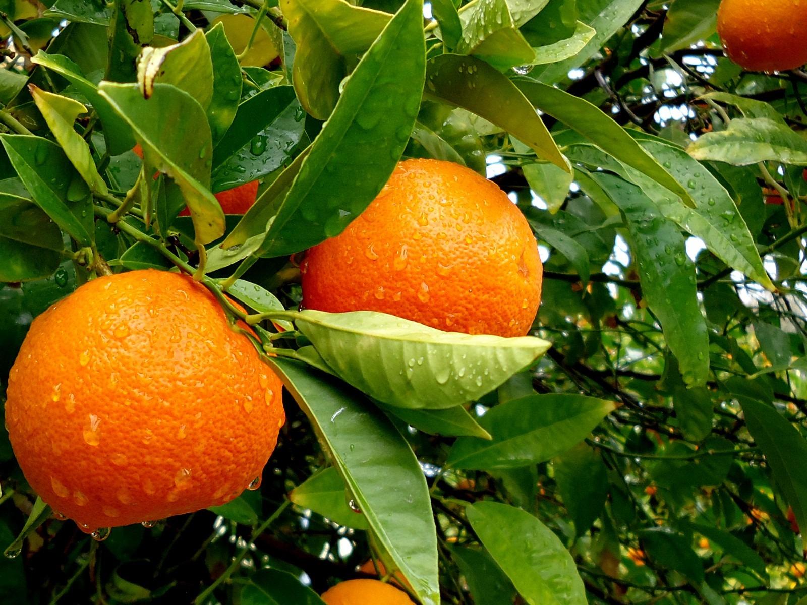 La regina dell'inverno: l'arancia – ricette con le arance mmmmmhhh