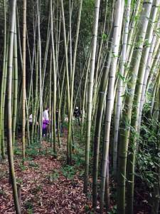 bosco di bambu storico giardino garzoni
