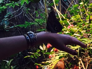 butterfly house giardino garzoni farfalle