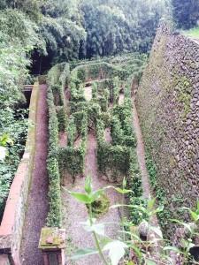 labirinto giardino garzoni