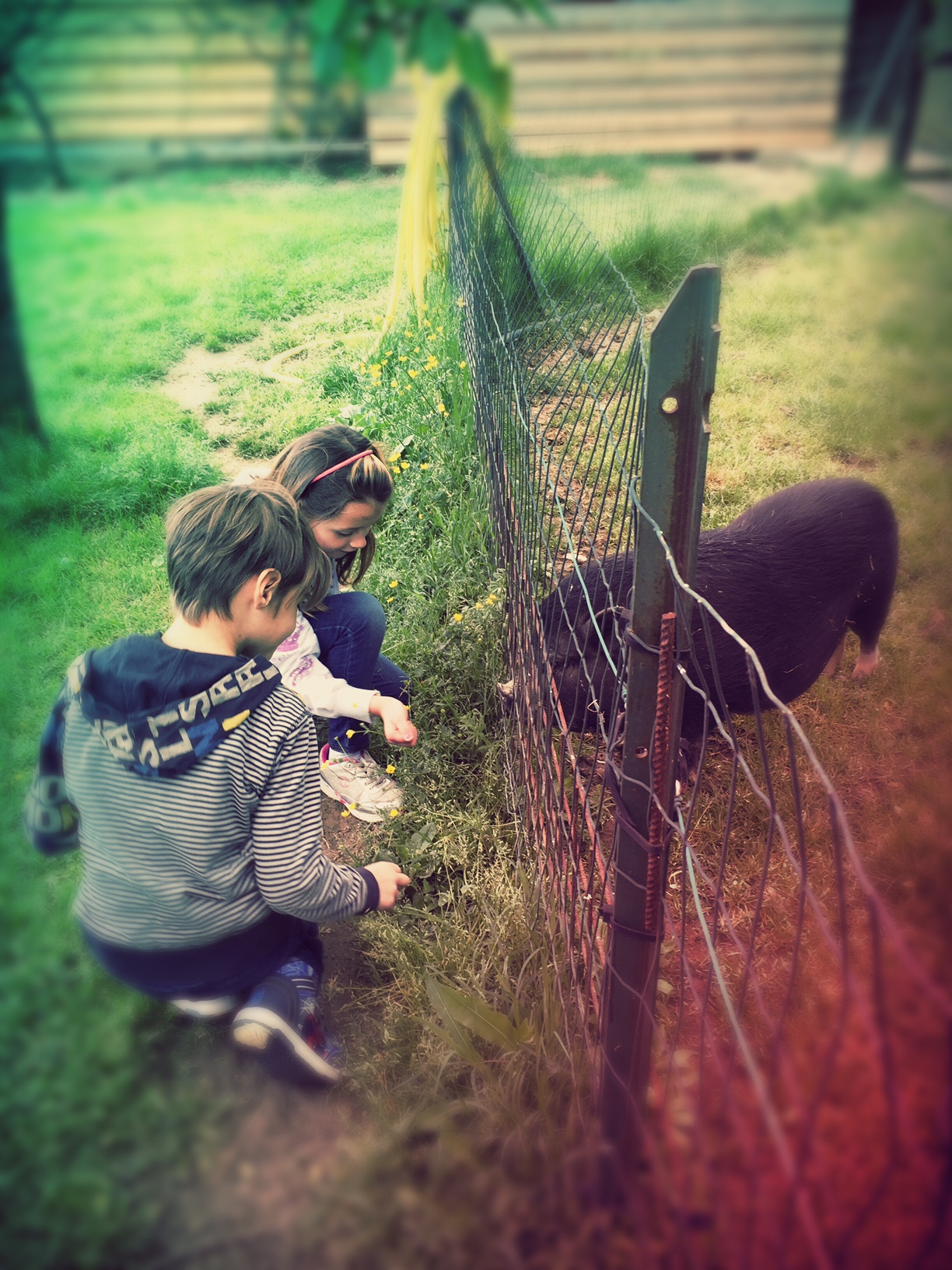 Maggio di attività nella natura e con gli animali a Firenze