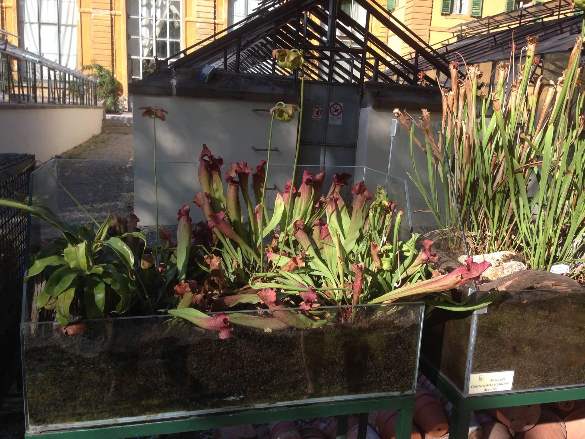 L 39 orto botanico giardino dei semplici firenze visita for Giardino orto botanico firenze