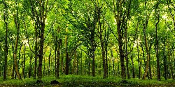 Viaggiando nel canto degli alberi progetto artistico nel bosco con Arzach