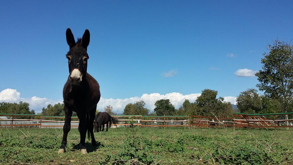 Domenica in fattoria a Firenze l'11 dicembre 2016